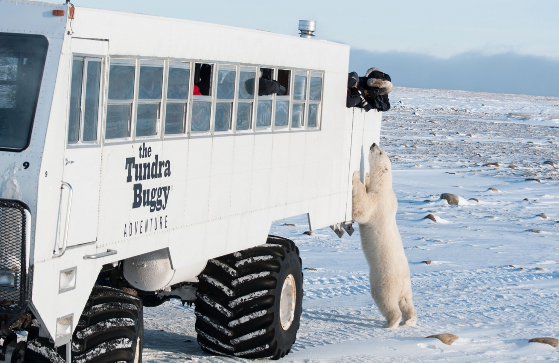 Tundra Buggy Tour